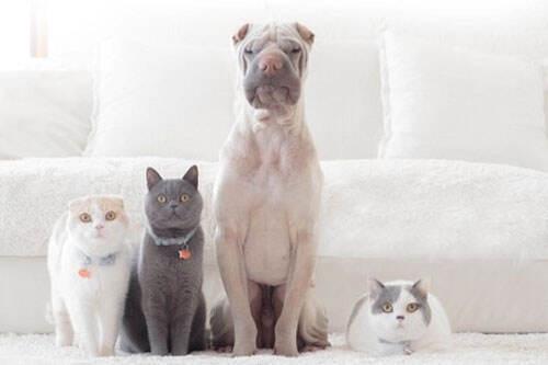 波奇宠物亏损上市,美团外卖也开始给宠物送饭了,这个市场有多大?